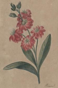 Album Konstancji Żychlińskiej
